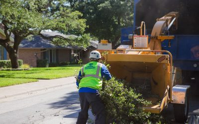 Why Does Storm Debris Cleanup Take So Long?